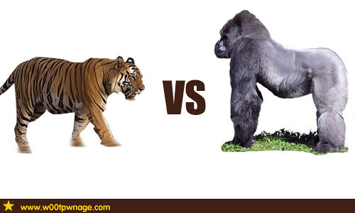 Tiger vs Gorilla | Flickr - Photo Sharing!