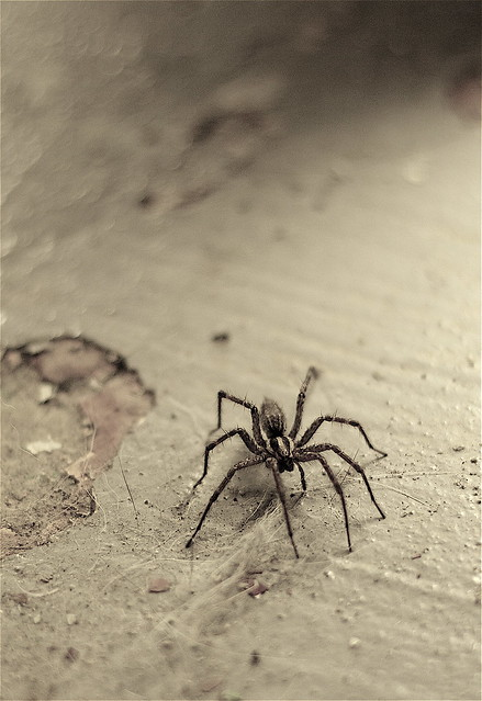 spider on the basement floor those hairs are most certainl