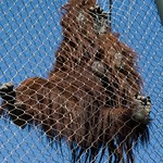 Los Angeles Zoo 078