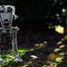 AT-ST Surveying the Woods by EternalSlothman