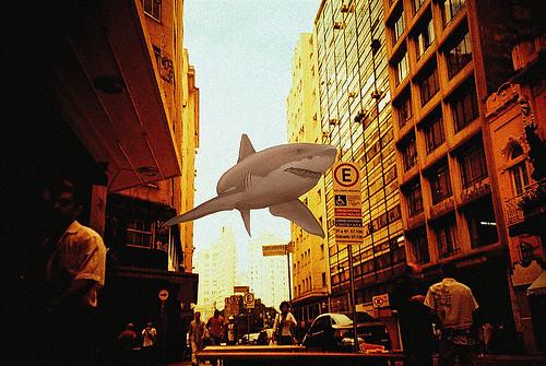 Tubarão voador