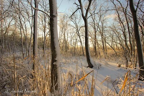 sunsetlight goldenhour naturephotography hammondindiana landscapephotography frozenswamp carlsonoxbowpark
