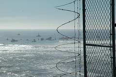 Boats and Barbed Wire, Mavericks