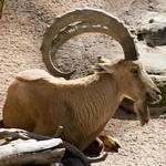 Los Angeles Zoo 047