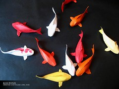 Paper Fish 33 Photos | Koi Pond | 624