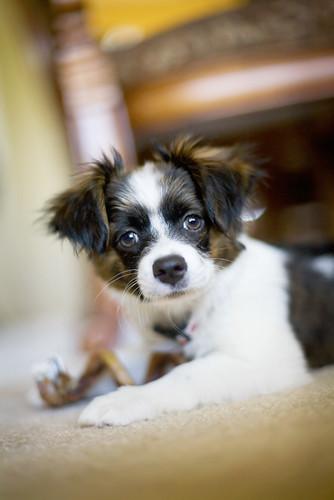 floppy ears | He belongs to family friends. I believe he has ...