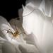 Daddy's Bloom by bksecretphoto