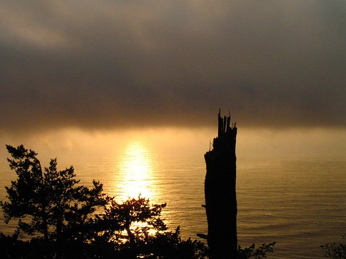 ocean trees sunset coast roadtrip pacificocean stump seashore