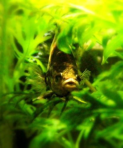 The World Of Fish Skittish Betta Fish Too Fightened To Eat