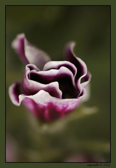 ruby rose手机壁纸