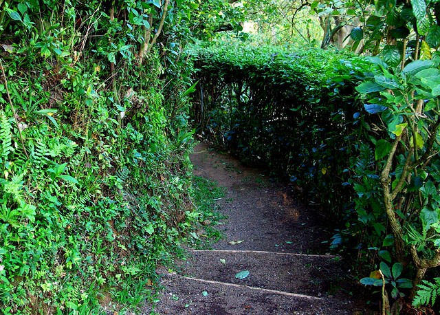 green path into the - photo #16