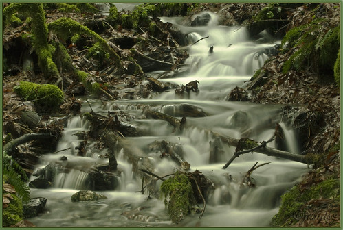 rain forest geotagged bravo stream falls coastal chilliwack naturesfinest janusz eow leszczynski supershot bridalvail abigfave superbmasterpiece geo:lat=49191493 geo:lon=121735597