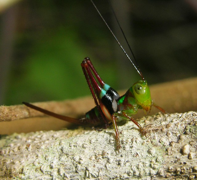 Colours of the Amazon rainforest