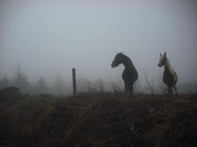 foggybuddies, Fujifilm FinePix J12