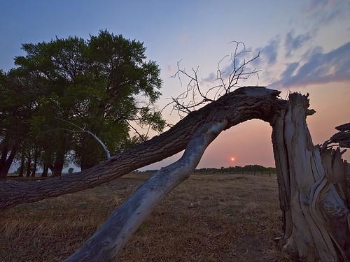trees sunset sky clouds landscape spring haze colorado smoke sanluisvalley bark smoky cottonwoods