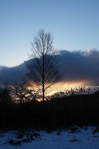 sunset sky lake snow tree silhouette japan hokkaido swanlake 天鵝湖 苫小牧 ウトナイ湖