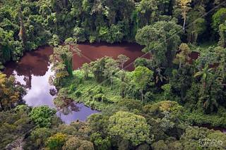 AERIAL CREEK RAINFOREST SIPALIWINI SURINAM AMAZONE SOUTH-AMERICA