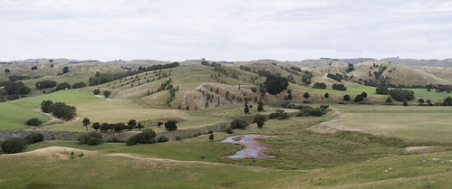 Wairarapa valley with trees