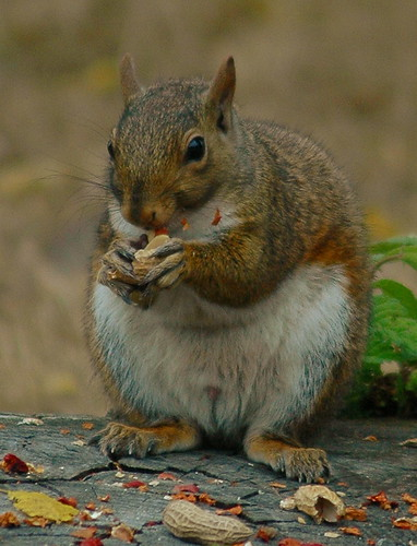 The VERY Happy Squirrel :o)