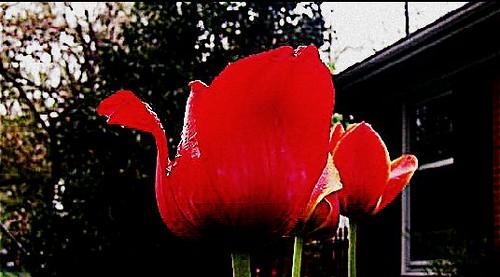 flowers red green geotagged kentucky crossprocessing subdivision louisvillekentucky ohiorivervalley fernvalley centralkentucky ohiorivercity jeffersoncountykentucky 60sfeel thebluegrassstate geo:lat=38160071 geo:lon=85686665