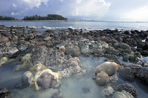 City Reefs: Kusu Island