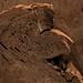 Smiling bread slice ©aleske