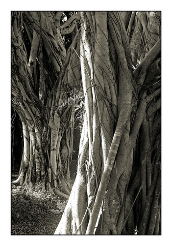trees bw pentax florida k100d justpentax pentaxsmcda1855f3556al