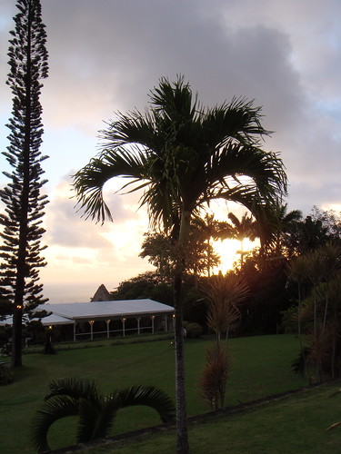 holiday sunrise island dawn palm caribbean stkitts alexhopkins ottleysplantationinn
