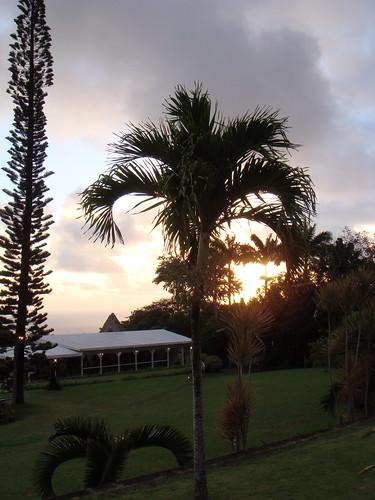 holiday sunrise island dawn palm caribbean stkitts alexhopkins ottleysplantationinn