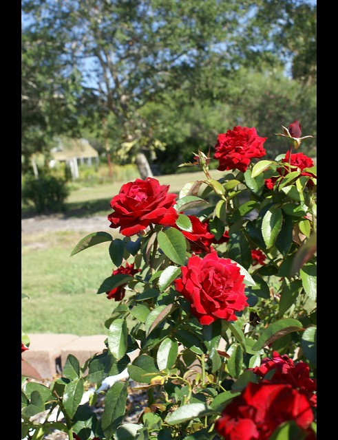 South Texas Botanical Garden Flickr Photo Sharing