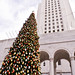City Hall Christmas Tree