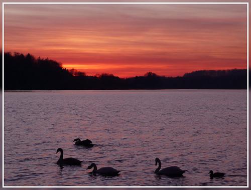 sunset sky sun lake france bird nature water landscape lac fabulous lorraine cygne vosges bouzey aplusphoto francelandscapes roseawards sanchey