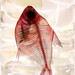 Specimen - fish