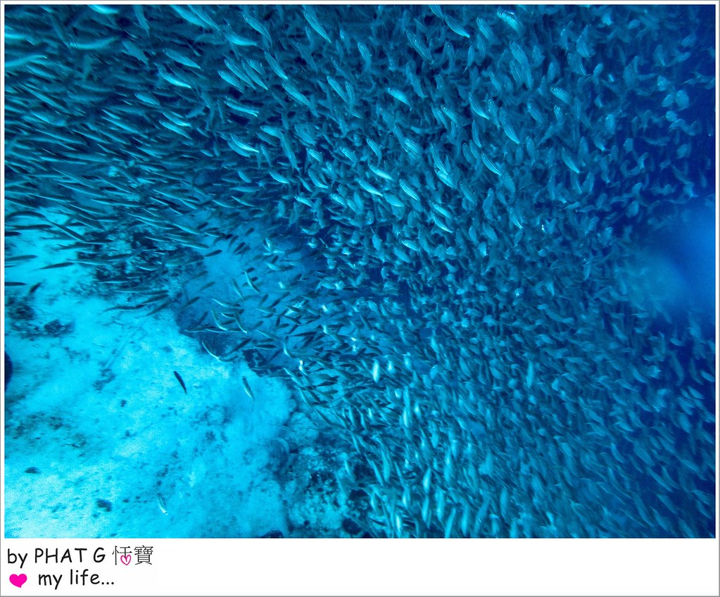 沙丁魚 14-2