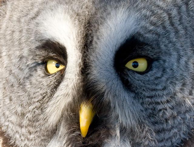 Creepy owl | Flickr - Photo Sharing!