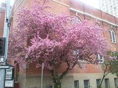 is pleased the trees by the church managed to realize it is Spring finally