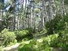 Sentier perdu de Casa Infurcata aux bergeries de Firuletu