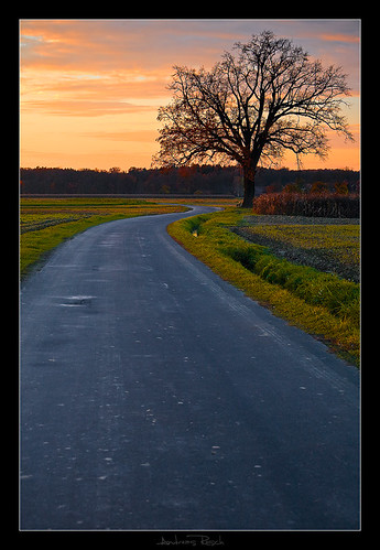 road autumn sunset tree austria styria