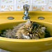cat bathtube by Keep Clicking
