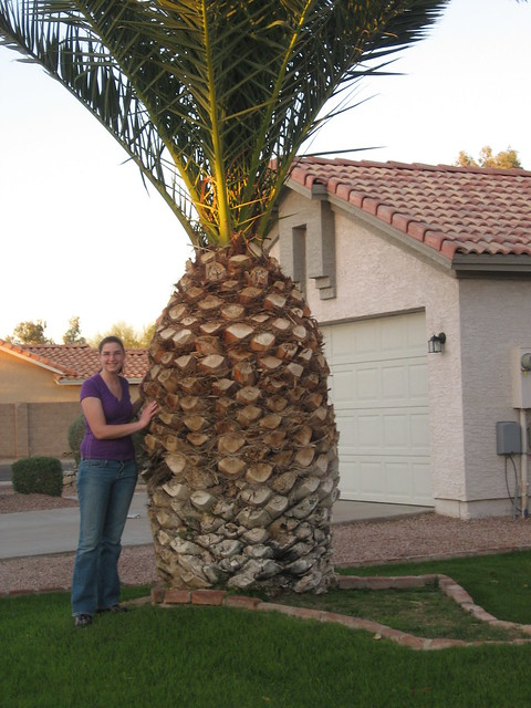 Pineapple Palm Tree! | Flickr - Photo Sharing!