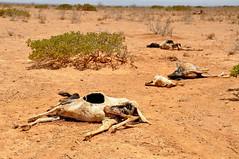 drought(0.0), desert(0.0), soil(1.0), sand(1.0), natural environment(1.0), mud(1.0), safari(1.0), wildlife(1.0),