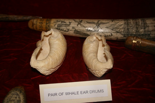 Whale ear drums
