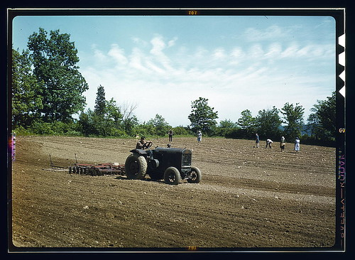 Farm owned by James Pompey, who 20 years ago came from Italy on the advice of a brother, Southington, Connecticut. People of Finnish, Slav, German, and Polish extraction help him to farm it  (LOC)
