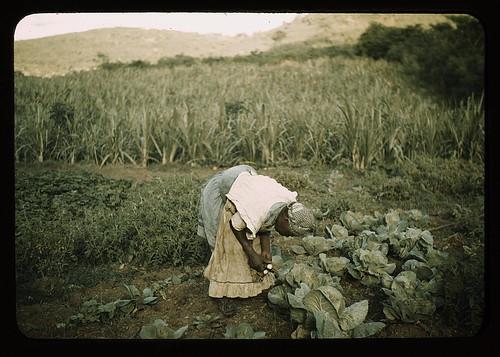 FSA borrower? in her garden, Puerto Rico  (LOC)
