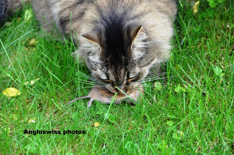 Bobinette and the mouse