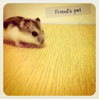 #animal #mouse #pet