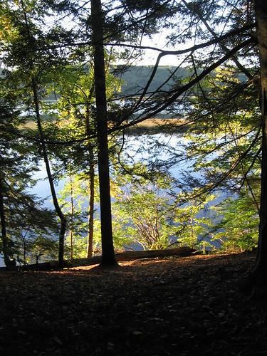 trees light connecticutriver westernmass bartoncove