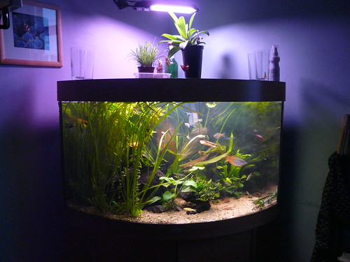 for Aquarium decoration ideas cheap