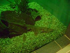 organism, green, freshwater aquarium, aquarium, aquatic plant,