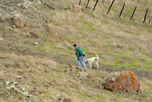 Walking the dog in Santa Teresa County Park